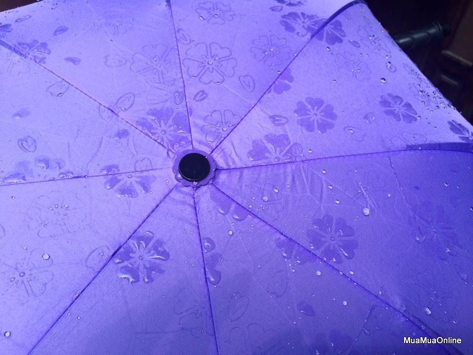 Dù Đi Mưa Nở Hoa Khi Gặp Nước Chống Tia UV Cao Cấp